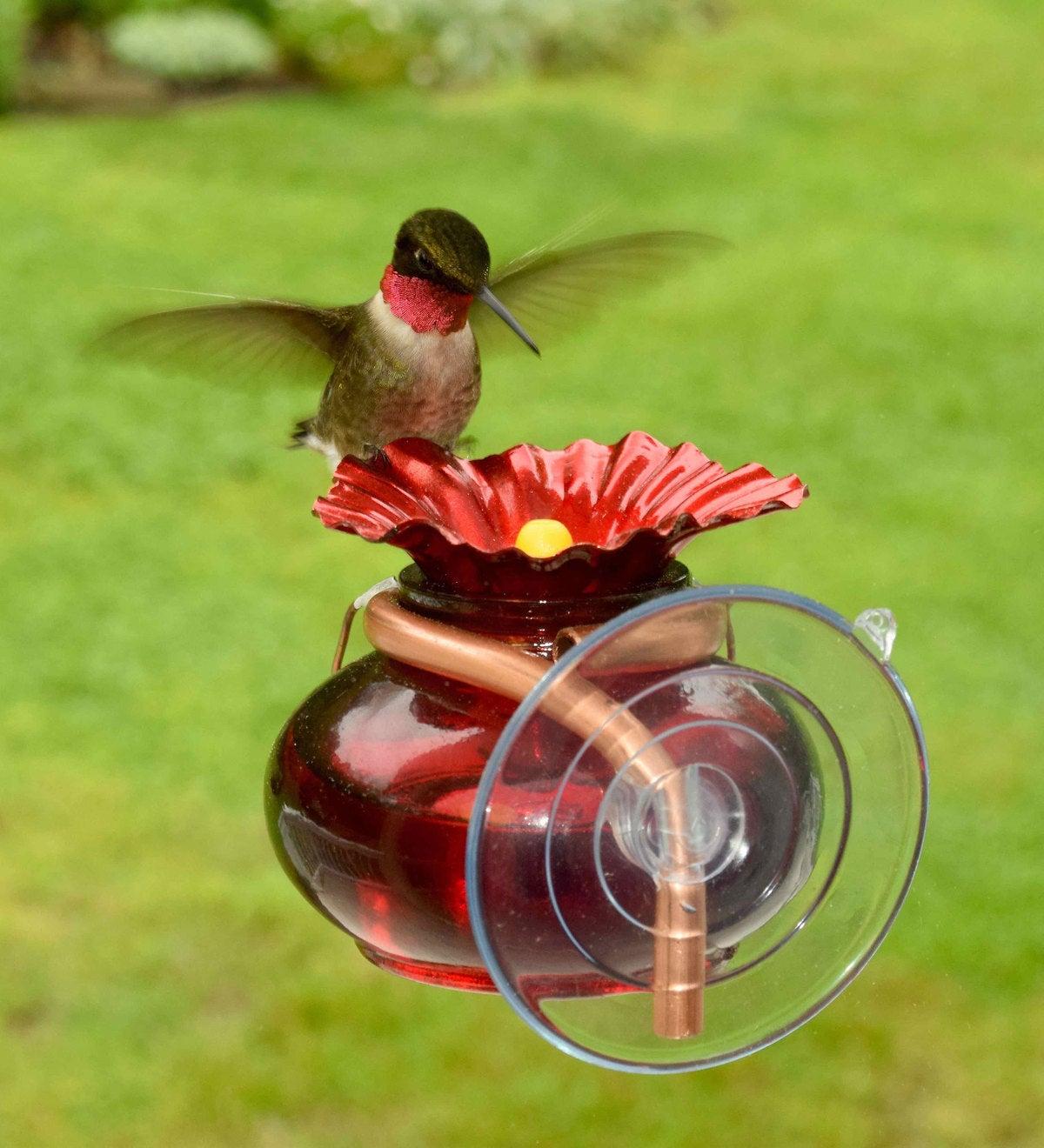 window hummingbird feeder with hummingbird