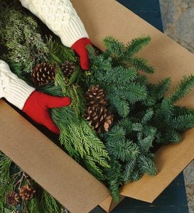 Holiday Woodland Evergreens 7 Lb. Box Of Greens