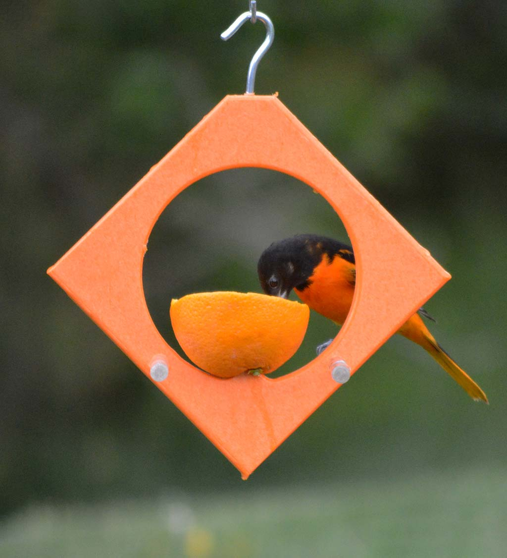 Recycled Plastic Oriole Diamond Fruit Feeder