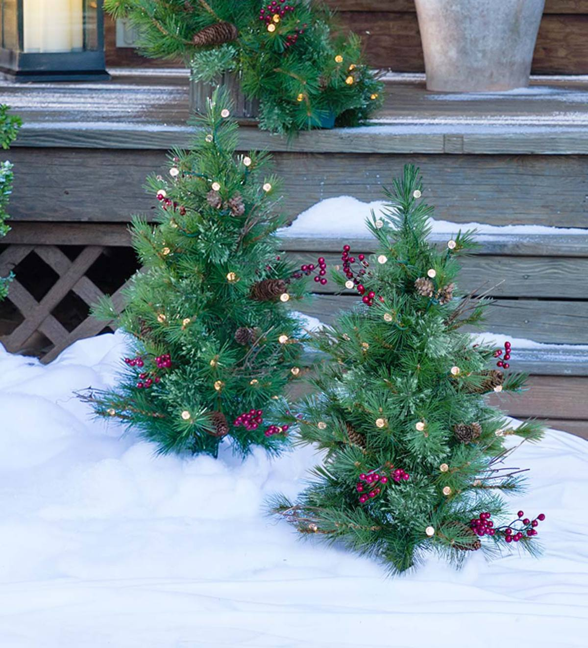 Living Christmas Trees For Sale: Lighted Pathway Christmas Trees, Set Of 2