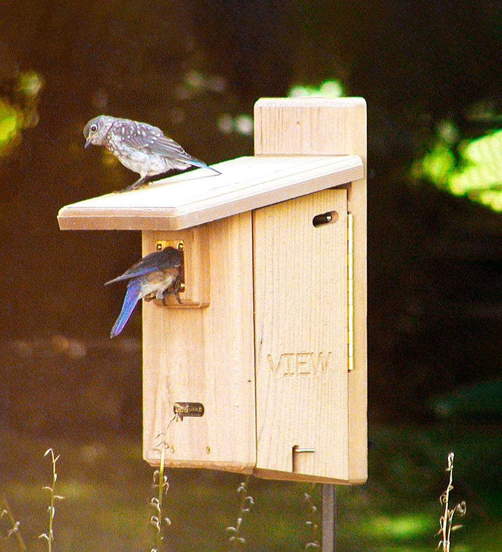 Ultimate Cedar Bluebird House