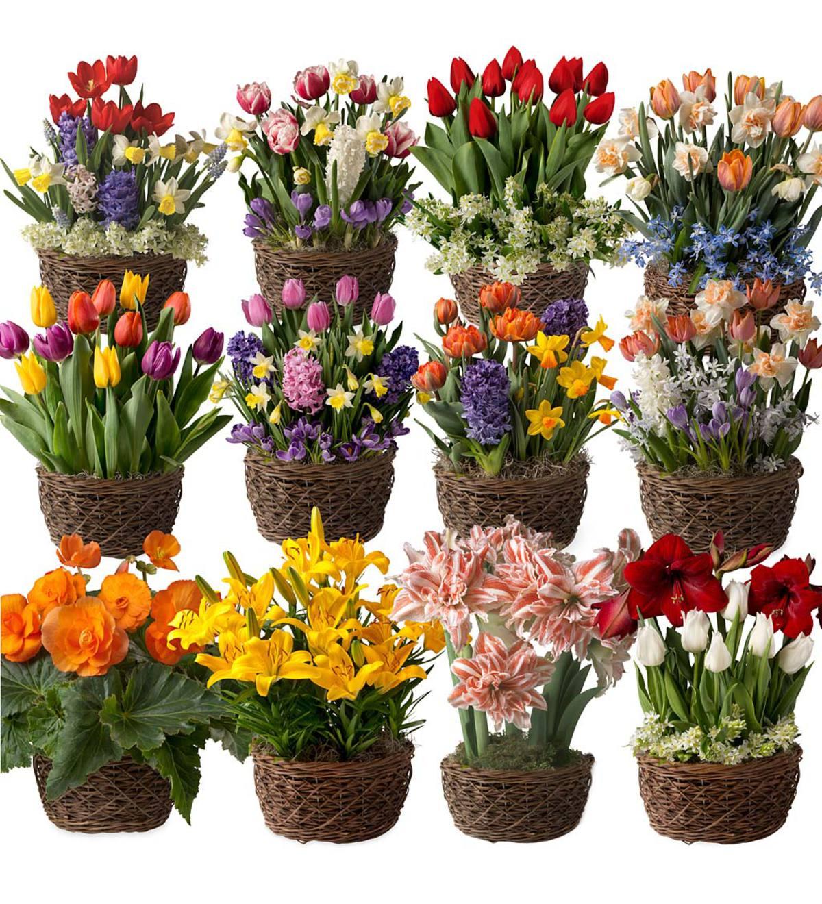 Twelve Months Of Flower Bulb Gift Gardens