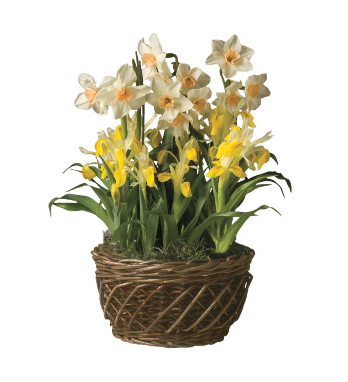 Hyacinth, Tulip And Narcissus Flower Bulb Garden - Ships March-May 2014