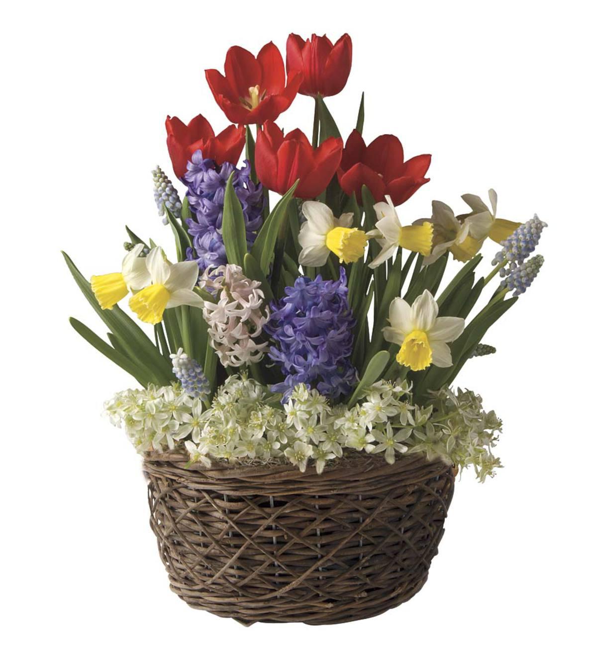 Assorted 19 Bulb Flower Bulb Gift Garden