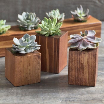 Succulents in Cedar Wood Planters, Set of 3