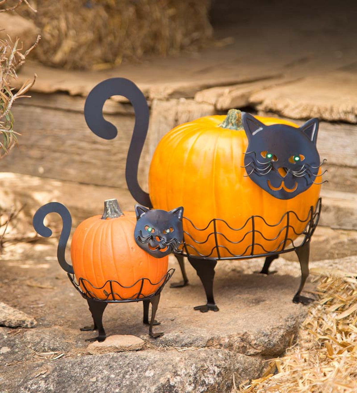 Set Of 2 Cat Pumpkin Holders With LED Eyes