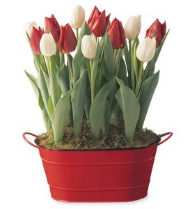Red and White Tulip Bulb Garden - Available To Ship Beginning November 21st
