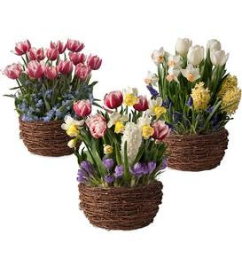 Three Months of Flower Bulb Gardens - Ships Each Month February-April