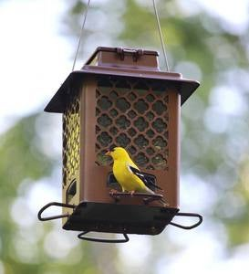 Squirrel-Resistant Metal Hopper Bird Feeder