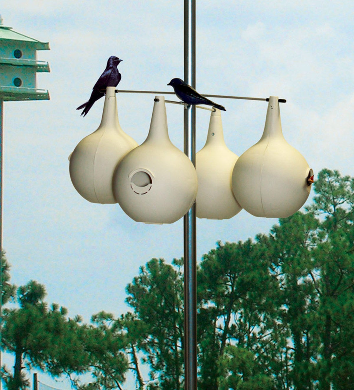 Purple Martin Gourd 8-pack & Pole Set