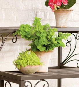 Nesting Metal Plant Stands with Scrollwork, Set of Three