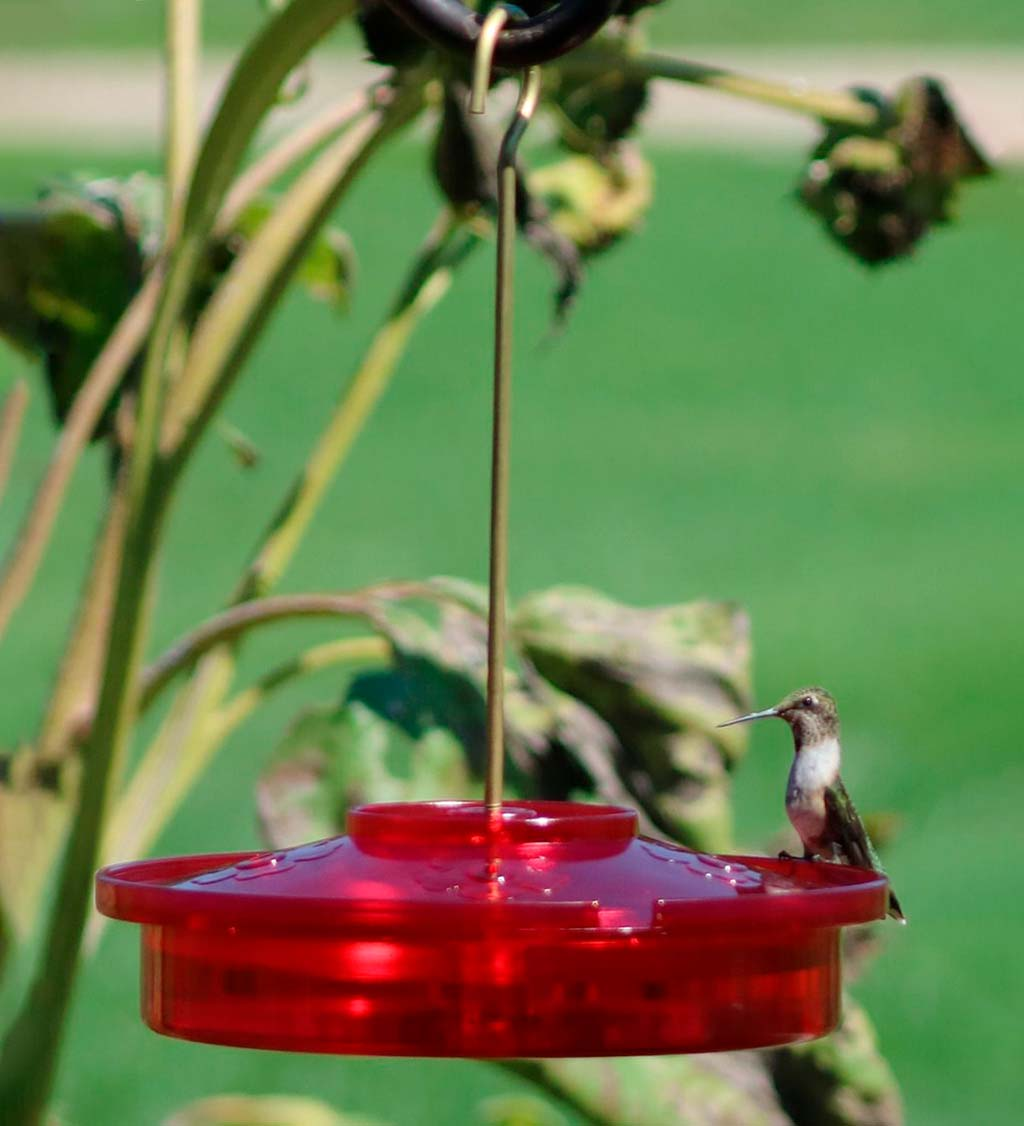 Hanging Hummingbird Haven Feeder