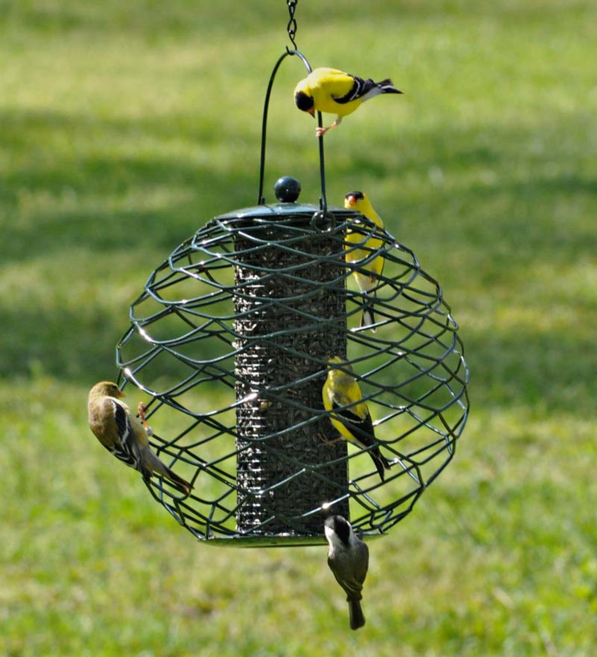 best 25 brd cage decoraton deas on pnterest.htm globe sunflower seed bird feeder plowhearth  globe sunflower seed bird feeder