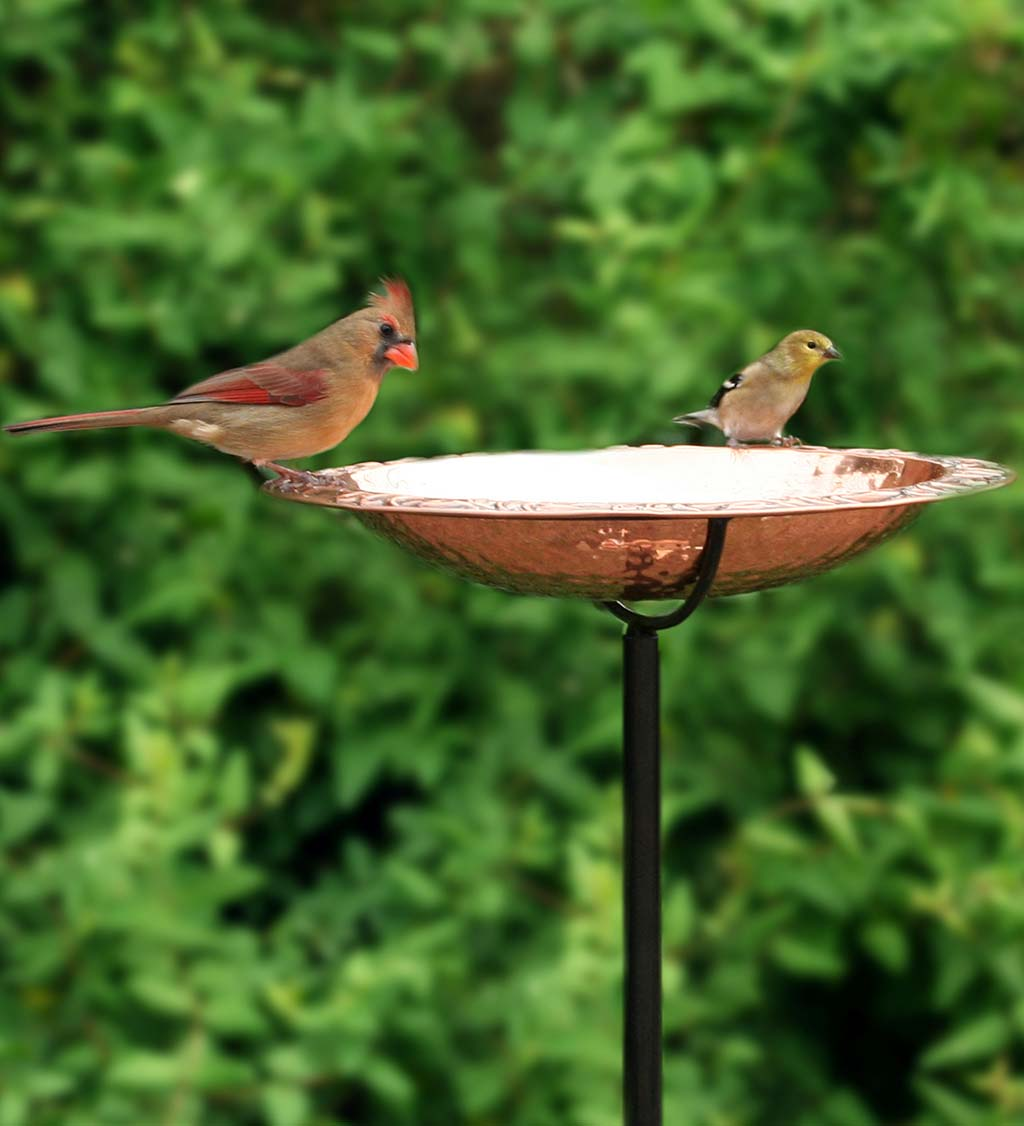 Pure Copper Birdbath on Powder-Coated Steel Pole With Sturdy Three-Prong Stake