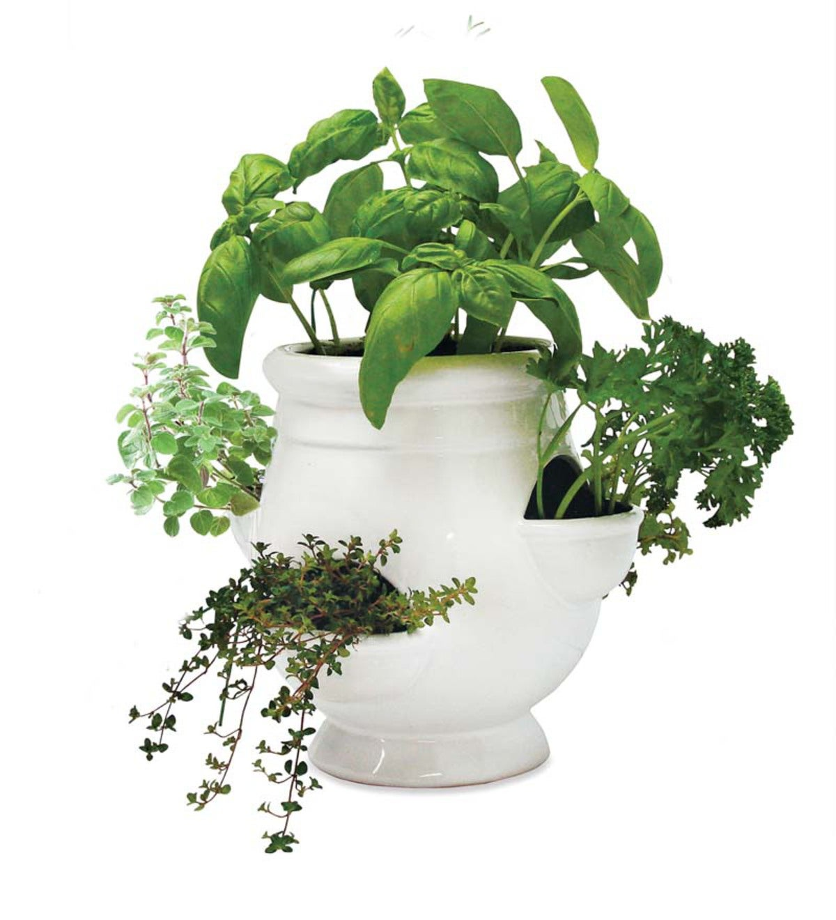 Windowsill Herb Planter: Windowsill Herb Garden Kit
