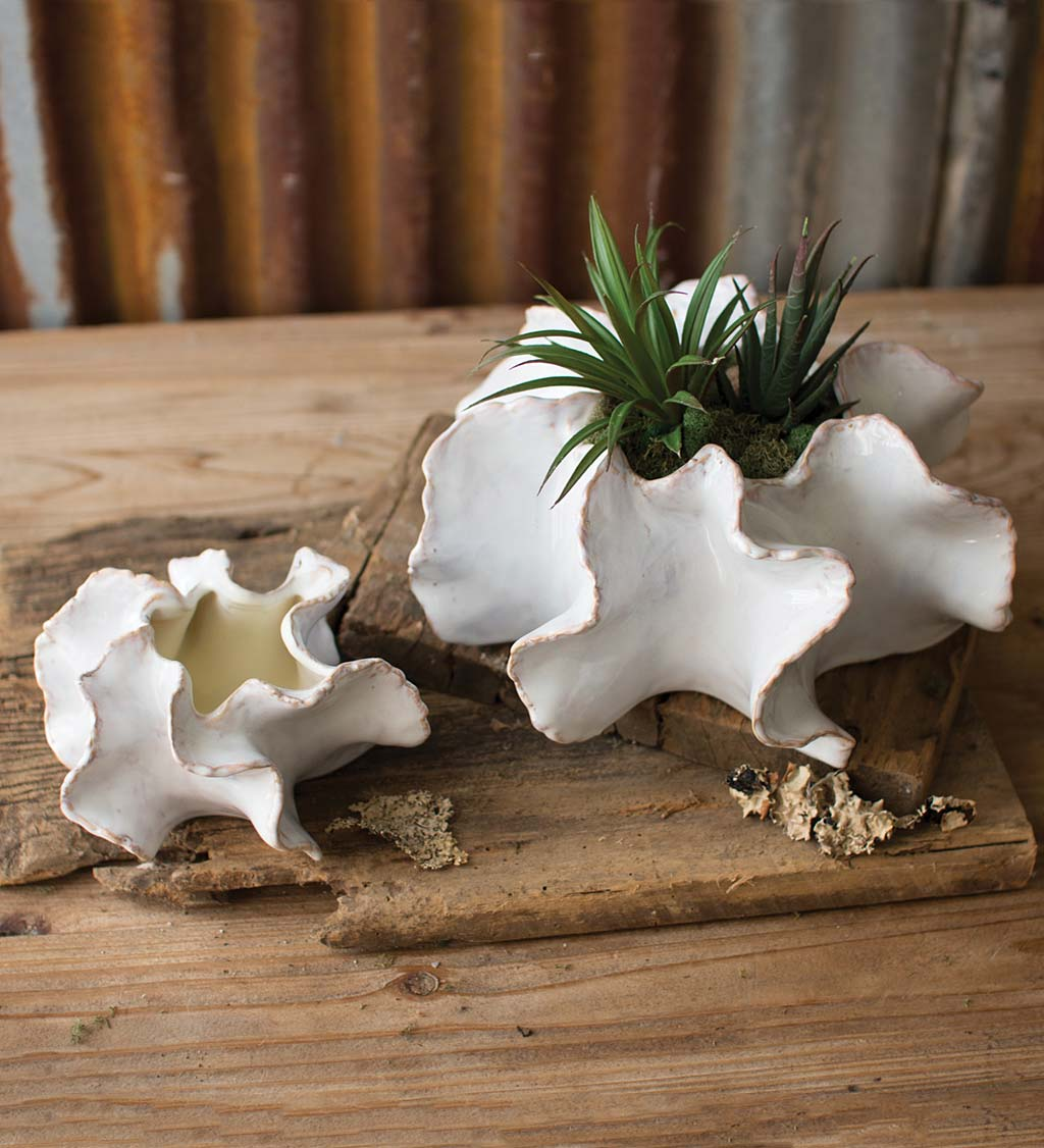 Organic Ceramic Planters Set of 2