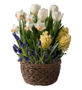Six Months of Flower Bulb Gardens - Ships Each Month February-July