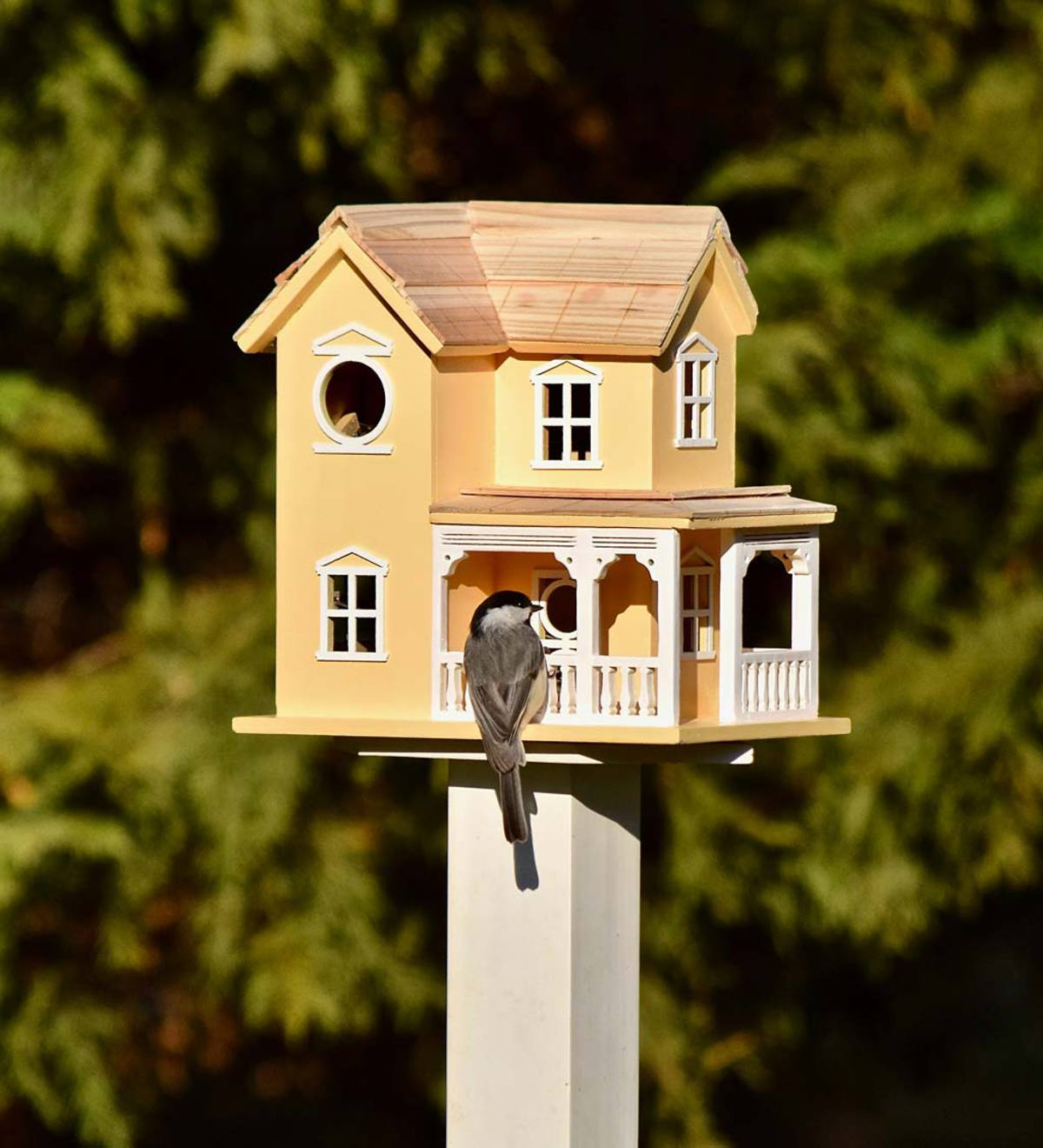 Prairie Farmhouse Lighted Birdhouse and Optional Wood Pole