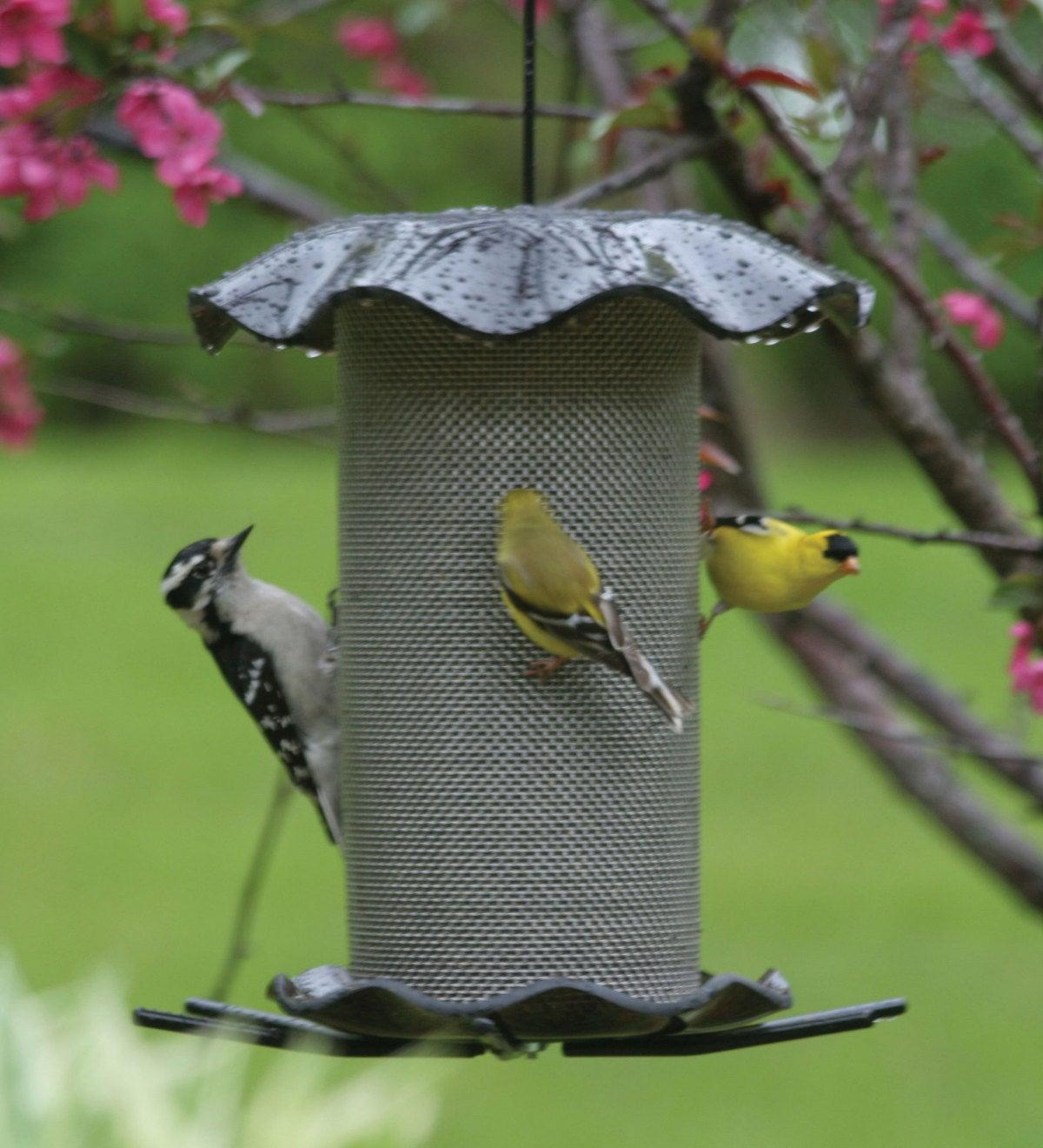birdfeeder in rain with birds