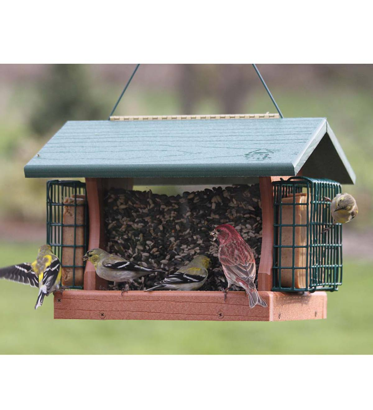 best 25 brd cage decoraton deas on pnterest.htm large going green bird feeder with suet cages plowhearth  going green bird feeder with suet cages