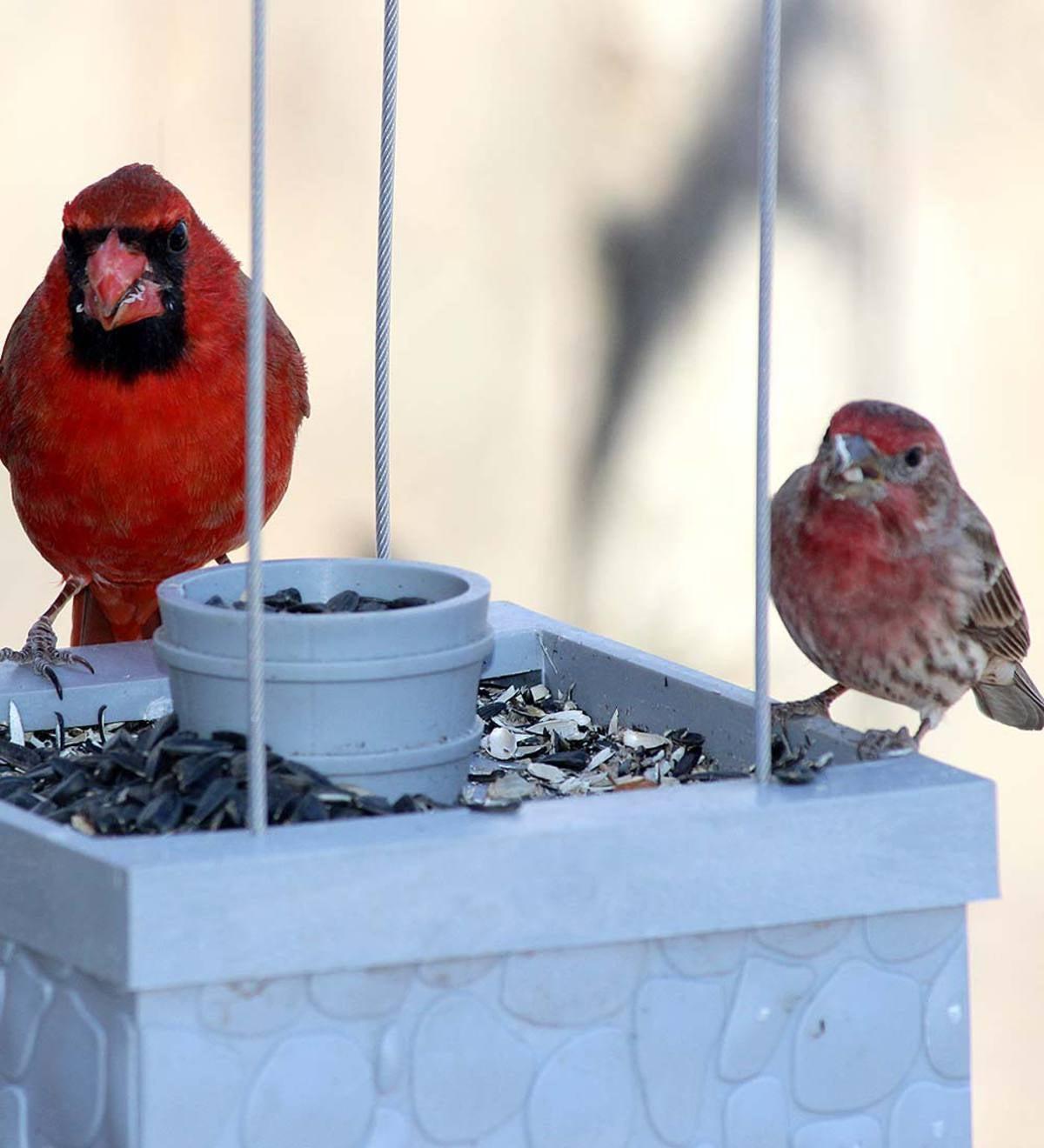Infinity Wishing Well Bird Feeder Plowhearth