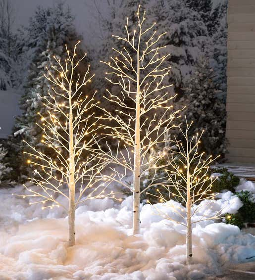 Image of Indoor Outdoor Lighted Birch Trees. Shop Christmas Trees